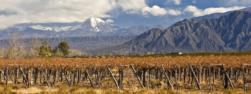 The Mendoza Province is one of Argentina's most important wine regions, accounting for nearly two-thirds of the country's entire wine production.