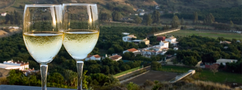 Pinot Grigio or Gris. Learn About The Popular White Wine