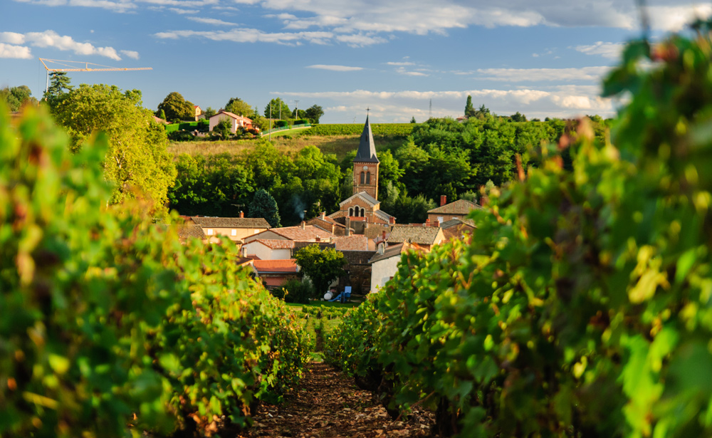 Beaujolais In France