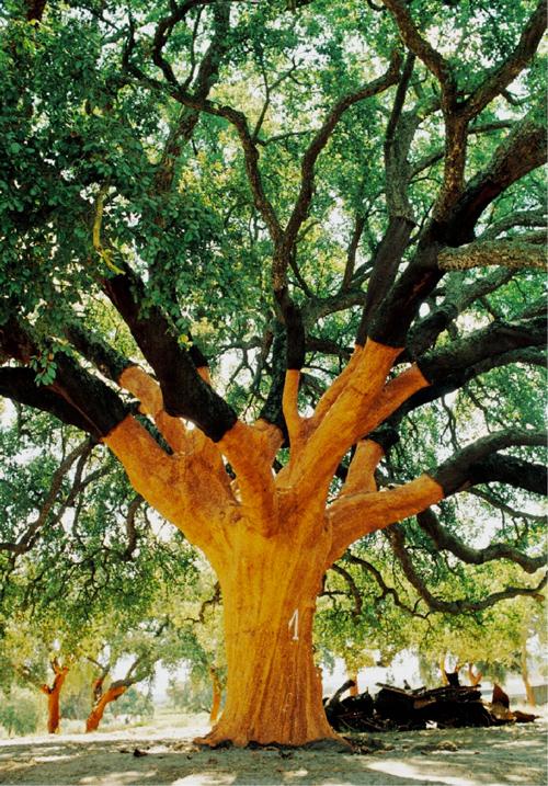 The Whistler Tree