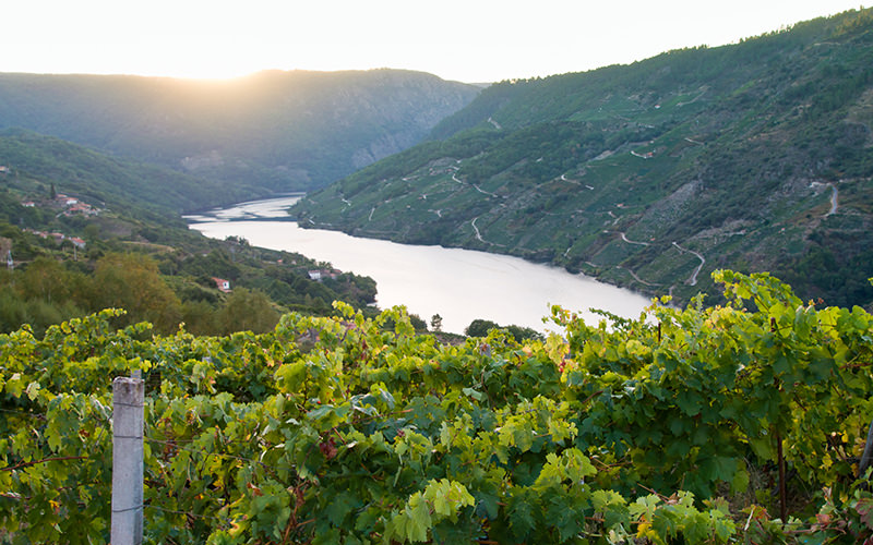 Marvel At Some Of The World's Steepest Vineyard's In Ribeira Sacra, Galicia