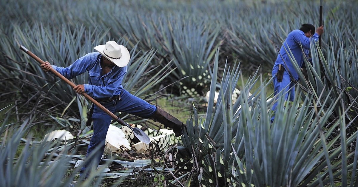 12 Things You Didn't Know About Tequila