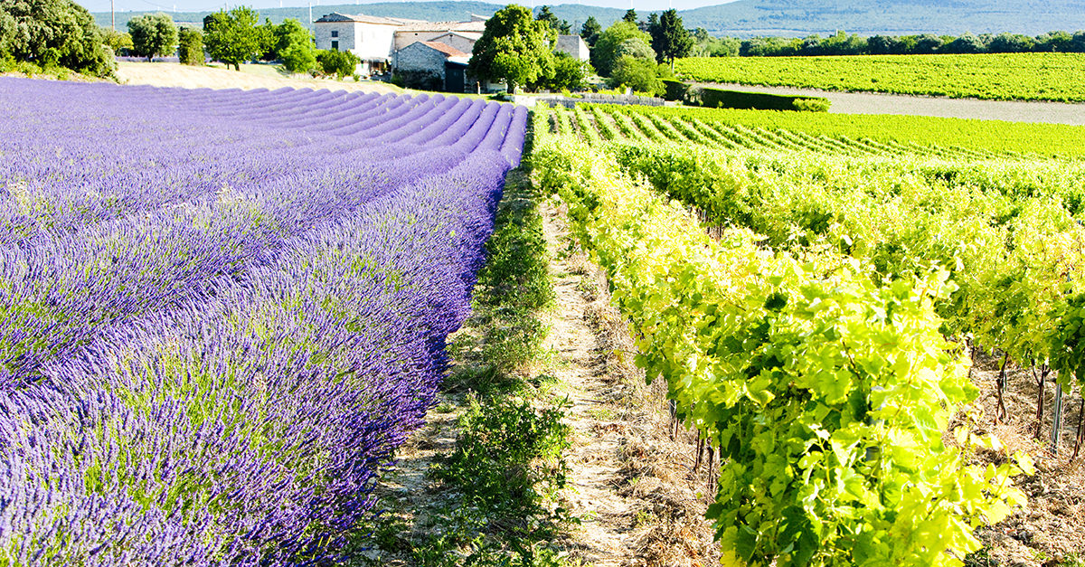 13 Things You Didn't Know About Provençal Rosé