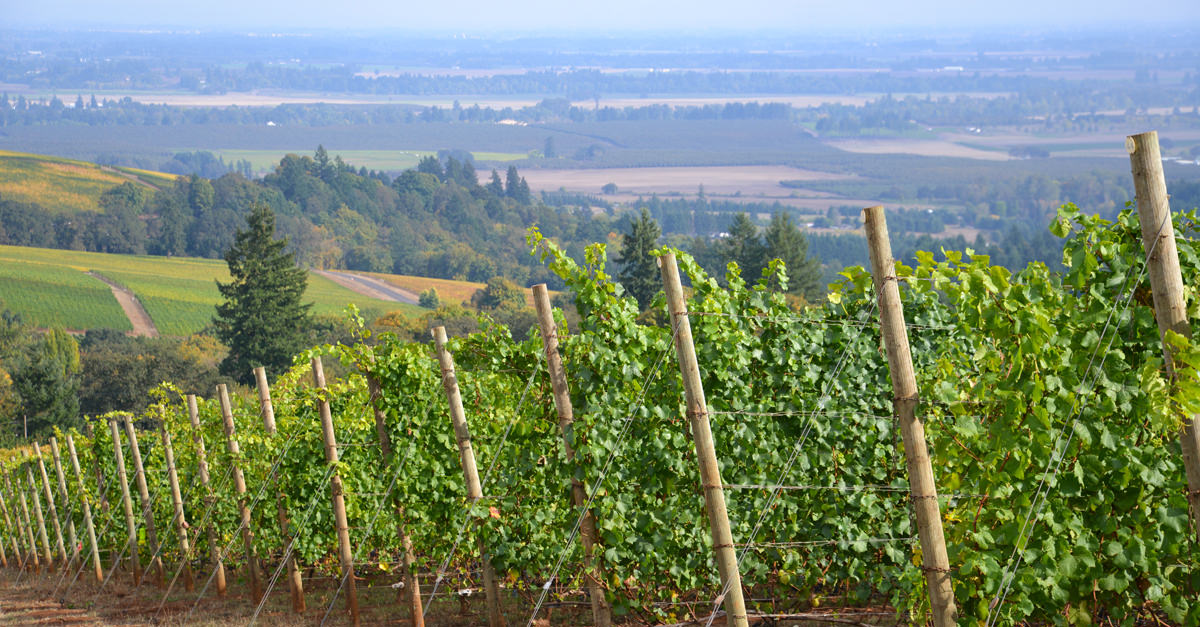 Pinot Noir Reveals The Differences Between Oregon And California Climates