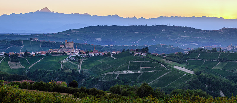 Barolo vineyards in Serralunga d'Alba at dawn