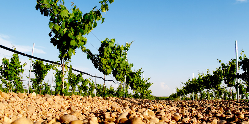 Get To Know Verdejo, A White Wine From Rueda, Spain