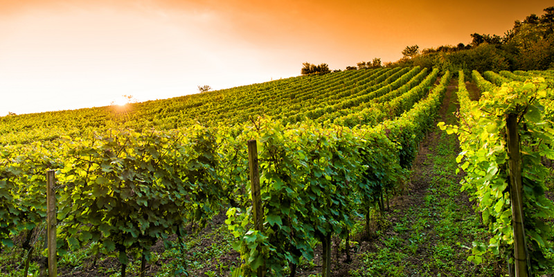 10 African American Winemakers Everyone Should Know