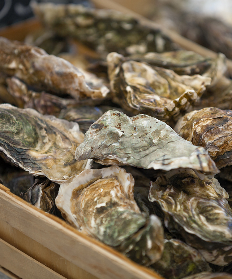 Everything You Need to Know About Oyster Stouts