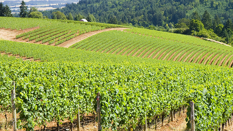 Willamette Valley is one of the top ten most incredible American wine regions to visit this summer