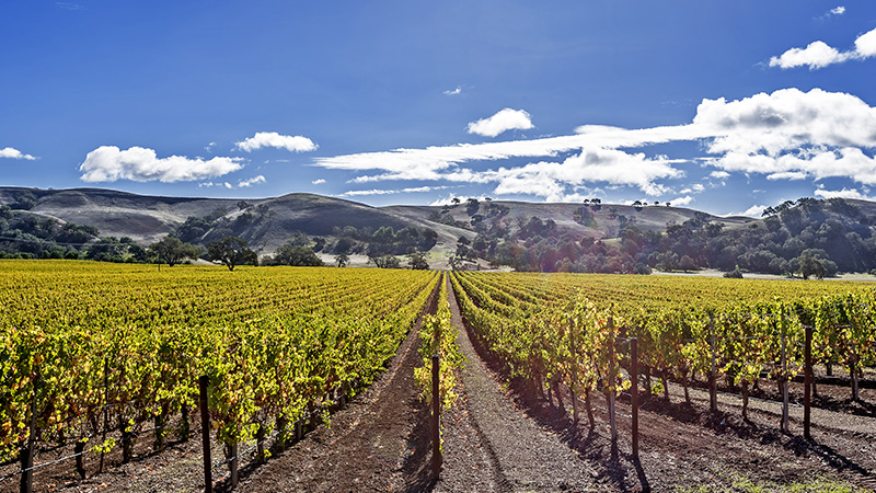 Santa Barbara is one of the top ten most incredible American wine regions to visit this summer