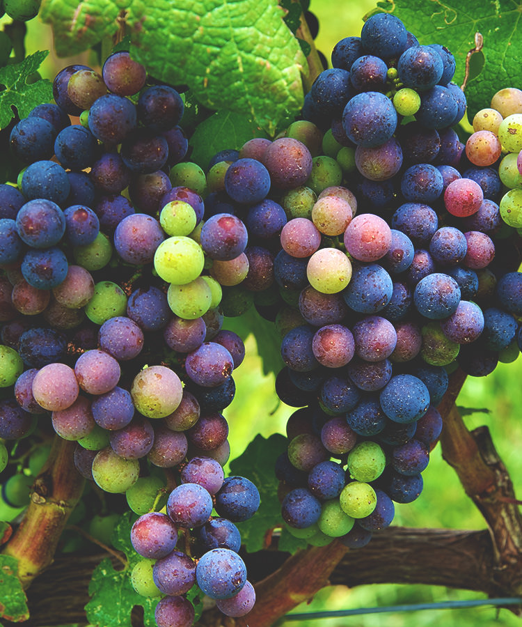We Asked 10 Somms: Which Grape Variety Is the Most Underrated?
