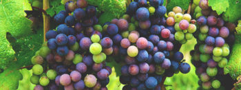 We Asked 10 Somms: Which Grape Varieties Are the Most Underrated?