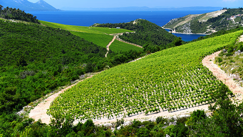 Dalmatia, Croatia is a Magical Wine Region to Visit In Your Lifetime