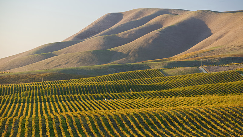 Santa Maria Valley is an easily accessible wine region from the LAX airport
