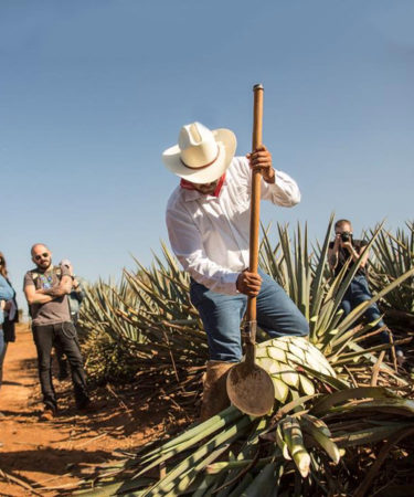 11 Things You Should Know About Patrón Tequila