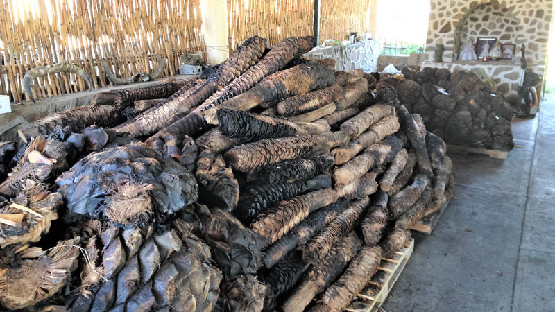 Go inside a Mexican distillery making mezcal with pre-Hispanic technique.