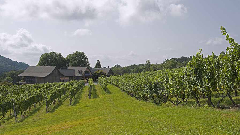 Linden Vineyards is one of the best wineries on the East Coast