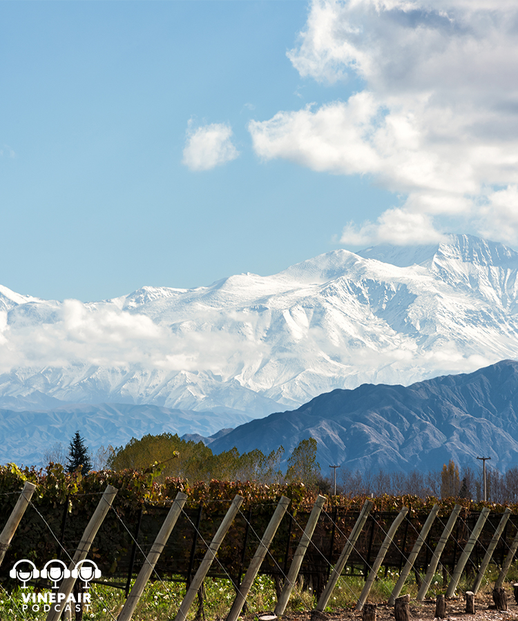 VinePair Podcast: How Chile's Wine Industry Is Leading the Way in Sustainability