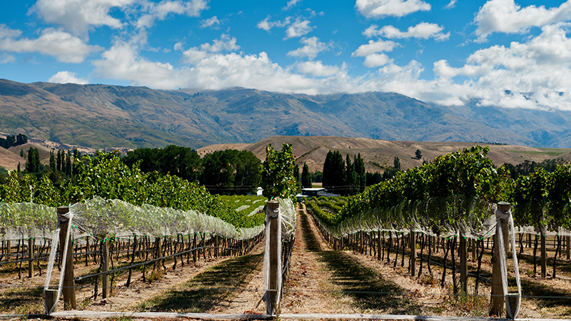 Central Otago is one of the best wine-making regions.