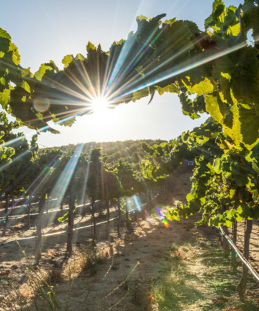 Paso Robles Wine Country Is Having Its Moment in the Sun