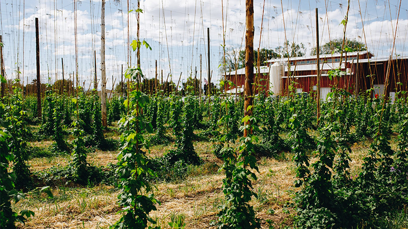 Bale Breaker Brewery is located in the Yakima Valley on one of the country's largest and oldest hop farms.