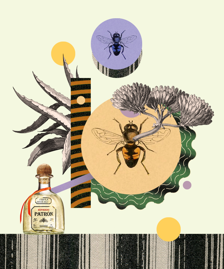 The Secret Life of Bees and The Role They Play in Tequila