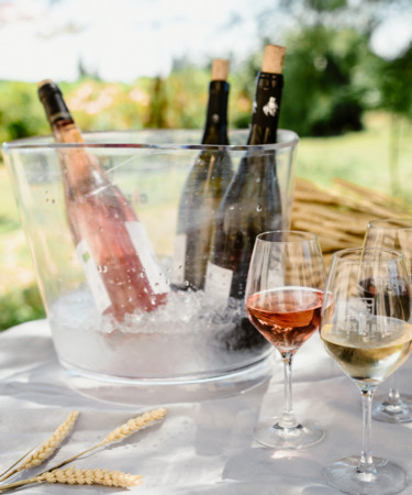 Côtes du Rhône: Food-Friendly Wines to Pair With Every Occassion